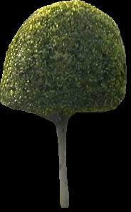 imagen Arbusto de jardin, en Follajes y vegetales - Texturas