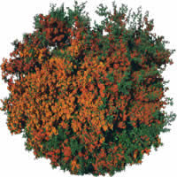 imagen Arbusto, en Fotografías para renders - Arboles y plantas