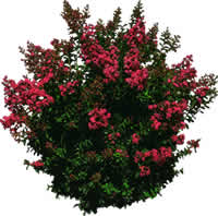Arbusto, en Fotografías para renders – Arboles y plantas