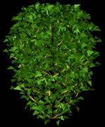 imagen Arbustos en 3d 001, en Arbustos en 3d - Arboles y plantas