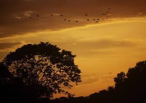 Atardecer llanero, en Cielos – Objetos paisajísticos