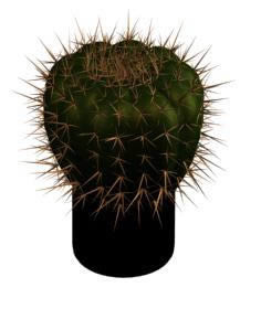 Cactus 3d, en Plantas de interior 3d – Arboles y plantas