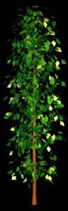 Conifera 3d, en Coníferas en 3d – Arboles y plantas
