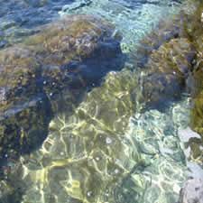 Coral mar, en Agua – Texturas