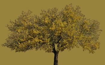 imagen Espinillo, en Fotografías para renders - Arboles y plantas