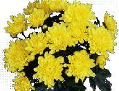 imagen Flor amarilla, en Fotografías para renders - Arboles y plantas