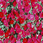 imagen Flores, en Follajes y vegetales - Texturas
