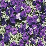 imagen Flores violetas, en Follajes y vegetales - Texturas