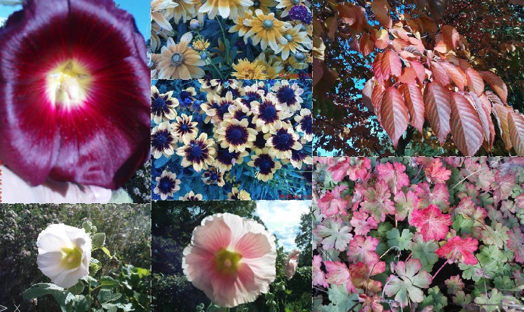 imagen Flores y vegetacion, en Fotografías para renders - Arboles y plantas