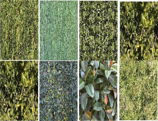 Follajes y cesped, en Follajes y vegetales – Texturas