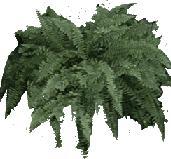 Helecho, en Fotografías para renders – Arboles y plantas