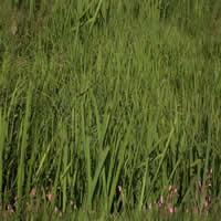 Hierba alta, en Follajes y vegetales – Texturas