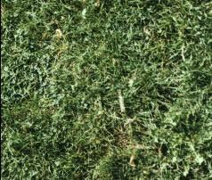 imagen Hierba - cesped, en Follajes y vegetales - Texturas