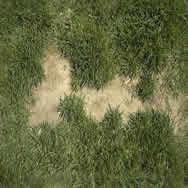 Hierba – cesped, en Follajes y vegetales – Texturas