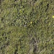 Hierba con flores, en Follajes y vegetales – Texturas