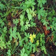 imagen Hierba, en Follajes y vegetales - Texturas
