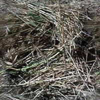 Hierba seca, en Follajes y vegetales – Texturas