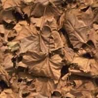 Hojas secas, en Follajes y vegetales – Texturas