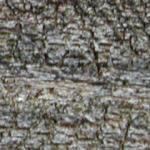 Madera rústica, en Madera – Texturas