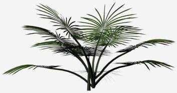 imagen Palma 3d, en Palmeras en 3d - Arboles y plantas