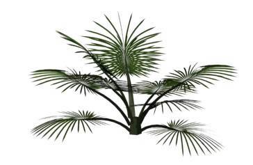 Palma 3d, en Palmeras en 3d – Arboles y plantas