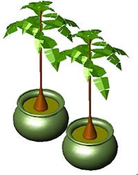 Planos de Palma 3d, en Plantas de interior 3d – Arboles y plantas
