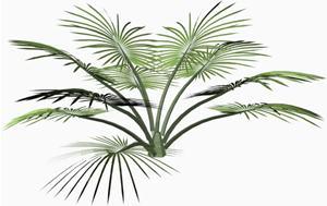 Palma, en Palmeras en 3d – Arboles y plantas