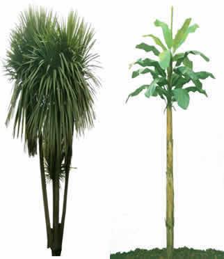 Palmas y palmeras, en Follajes y vegetales – Texturas