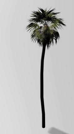 imagen Palmera 3d alta, en Palmeras en 3d - Arboles y plantas