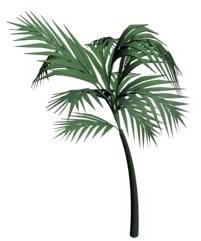Palmera 3d, en Palmeras en 3d – Arboles y plantas