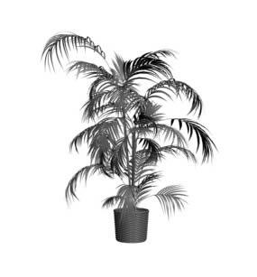 imagen Palmera, en Palmeras en 3d - Arboles y plantas