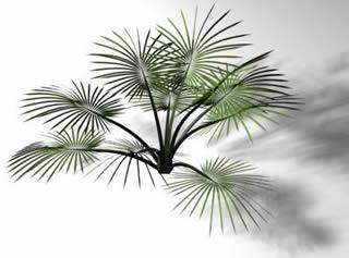 imagen Palmera petiza, en Palmeras en 3d - Arboles y plantas