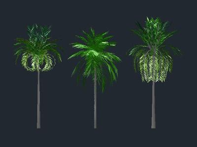 Planos de Palmeras 3d con texturas, en Palmeras en 3d – Arboles y plantas