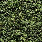 Pasto, en Follajes y vegetales – Texturas