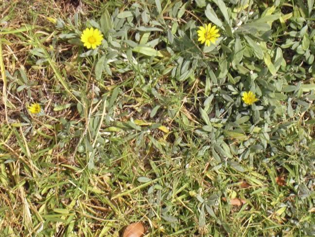 imagen Piedras y plantas, en Follajes y vegetales - Texturas