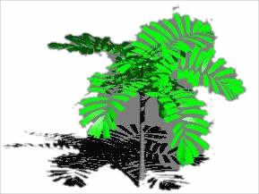 imagen Plamera en 3d, en Palmeras en 3d - Arboles y plantas