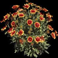imagen Planta con flores, en Fotografías para renders - Arboles y plantas