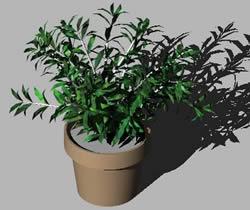 imagen Planta con maceta 3d, en Plantas de interior 3d - Arboles y plantas