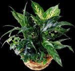 imagen Planta de interior, en Fotografías para renders - Arboles y plantas