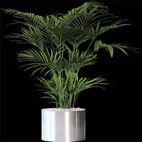Planta de interior, en Fotografías para renders – Arboles y plantas