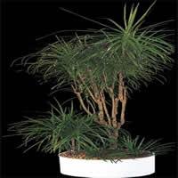 Planta de interior en maceta, en Fotografías para renders – Arboles y plantas