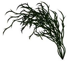 imagen Planta de jardín 3d, en Arbustos en 3d - Arboles y plantas