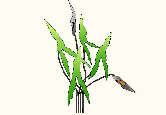 Planos de Planta, en Arboles en planta – Arboles y plantas