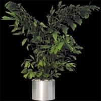 imagen Planta en macetacon mapa de opacidad, en Fotografías para renders - Arboles y plantas