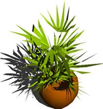 Planos de Planta en maseta 3d, en Plantas de interior 3d – Arboles y plantas