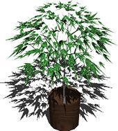 Planos de Plantas de interior  3d, en Plantas de interior 3d – Arboles y plantas