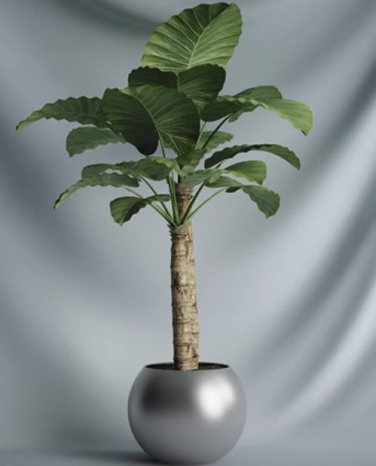 imagen Plantas interiores, en Plantas de interior 3d - Arboles y plantas