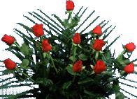 Rosas, en Fotografías para renders – Arboles y plantas