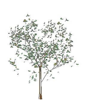 Planos de Strom arbol, en Arboles en 3d – Arboles y plantas