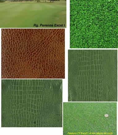 imagen Tecturas de cesped, en Follajes y vegetales - Texturas